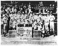 MLB 1934 St. Louis Cardinals Team Picture Black & White 8 X 10 Photo Picture