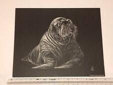 Vintage Walrus - Black and White Print - Jane Hill Studio - 1977