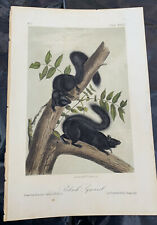 Audubon: Quadrupeds 1st. Edition Black Squirrel Plate 34 - 1849 Octavo