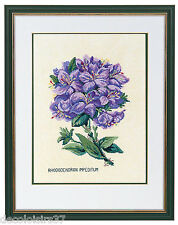 Eva Rosenstand  12-894  Rhododendron  Kit Point Compté