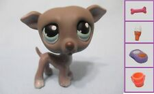 Littlest Pet Shop Dog Greyhound Whippet 319 and Free Accessory Authentic Lps