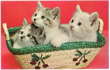 Postcard Kittens in Basket, Greetings from Greenville, NY Message on Back