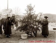 A Christmas Tree for the Horses, Wash. DC- 1918 - Historic Christmas Photo Print