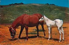 GIANT POSTCARD 6x9 VINTAGE HORSES FARM PASTURE FOAL HILLS VALLEYS