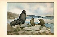 "1926 Vintage ANIMALS ""SEAL"" GORGEOUS COLOR Art Print Plate Lithograph"