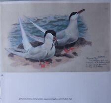 Beau Tunnicliffe Oiseau Imprimé ~ Commun