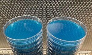 BLUE AGAR X 10  - Sterile Water Agar (WA) Petri Dishes for mushroom cloning