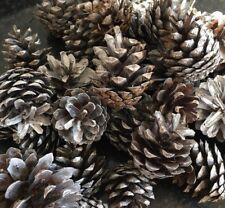 Christmas snow White Pine Cones fir Cones 2-6cm (approx 16)