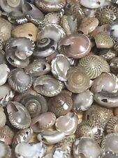 (lot 200 Plus) Tiny Beautiful Seashell Loose Beads