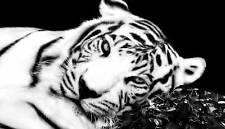 """CANVAS ART BLACK AND WHITE TIGER FRAMED PICTURE 36""""x20"""""""
