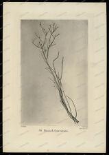 Druck-Stahlstich-Engraving-G.Allen-G.Cook-Allen&Co.Sc-Branach Curvature-74