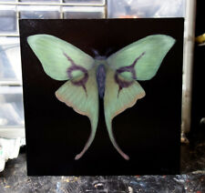 ORIGINAL oil painting Alice Cooper Moth faux taxidermy rock band butterfly gift