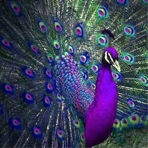 Full Drill 5D Diamond Painting Kits Embroidery Cross Stitch Peacock Mural Decor