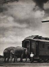 1940's Vintage CIRCUS ELEPHANTS & TRAIN Animal Ringling Brothers Photo Art 16x20