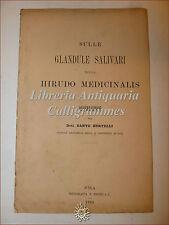 MEDICINA ANATOMIA: D. Bertelli, GLANDULE SALIVARI nella HIRUDO MEDICINALIS 1888