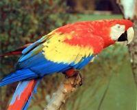 Red Macaw Parrot Tropical Bird Kids Wall Decor Art Print Poster (16x20)