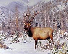 Big Bull Elk Antler Mountain Wildlife Animal Picture Wall Decor Art Print (16x20