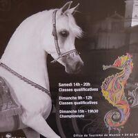 3 Poster Caballo Arabe Mediterráneo País Árabes Menton Francesa Riviera 2016