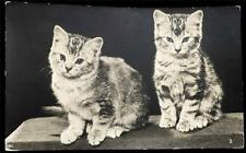 OLD POSTCARD OF CATS - USED 1955