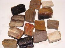 PETRIFIED WOOD Tumble Rough for Rock Tumbler - Specimen