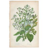 Anne Pratt Flowering Plants antique 1860 botanical print, Pl 154 Figwort