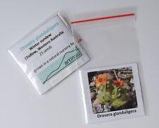 Drosera glanduligera_Sundew_Carnivorous Plant_Western Australia_25 fresh seeds