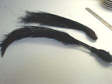 Vintage Antique Edwardian FEATHERS LOT 2 Millinery Black EMU Plume Quills