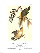 Worm-Eating Swamp Warbler Vintage Bird Print by John James Audubon