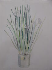 ''Naricissus'' by Diana Wege, Colored Pencil Drawing