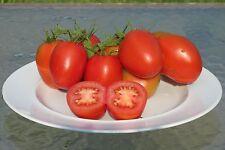 De Barao Heirloom Tomato Seeds- 50+ 2017 Organic Seeds- Highly Productive!