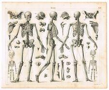 ORIGINAL ANTIQUE PRINT VINTAGE 1851 ENGRAVING ANATOMY OF BONES SKELETON SKELETAL