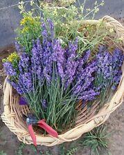 Fresh Dried Lavender  Royal Velvet Bright Purple  100 to 150 stems 2020 Harvest