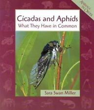 Cicadas & Aphids (Animals in Order)