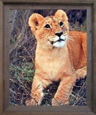 Lion Cub Big Cat Wild Animal Barnwood Framed Wall Decor Art Print Picture 19x23