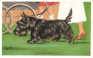1936  SCOTTISH TERRIER  Homeward Bound  MAC  Lucy Dawson  Dog Postcard