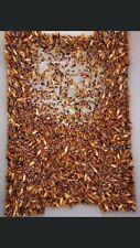 270-300 Medium Subadult Adult Sizes Mix Turkistan Roaches - LIVE FOOD!