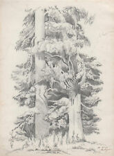 COPPIA DI ALBERI Malagnon - Trees Arbres - Disegno Originale a Matita 1946