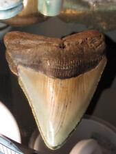 "4"" Very Good Stabilized Carolinas Megaladon Shark Tooth Fossil"