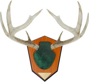 Allen Antler Mounting Kit Skull Cover Engraveable Plaque Deer Wall Mount Hanger