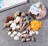Natural Craft Sea Shells Wedding Table Seashells Decor Fish tank Decoration 120g