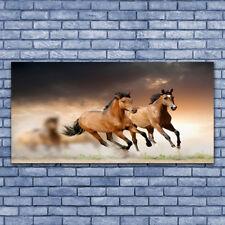 Wandbilder 100x50 Glasbild Druck auf Glas Pferde Tiere
