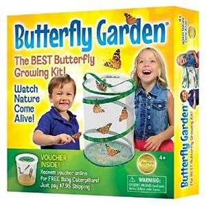 Insect Lore BH Butterfly Growing Kit With Voucher to Redeem Caterpillars Later