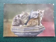 VINTAGE CAT POSTCARD - DREAMING THE HAPPY HOURS AWAY - CATS KITTENS
