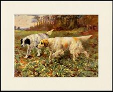 ENGLISH SETTER TWO DOGS AT WORK LOVELY DOG PRINT MOUNTED READY TO FRAME