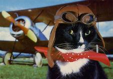 Cat Empire (Wwii Flying Ace) 'Flying Tiger' Black Cat Aviator Art Postcard 4x6