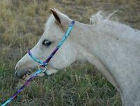 Halter All SMALL Miniature, Foal, Pony, Mini Adjustable Slip Lead PATTERN USA