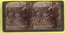 Stereoscopic Card - Banana Plantation, Hawaiian Islands - Underwood & Underwood