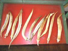 50+ Okra Pods Dried Floral Arrangements Rustic Primitive Long Pods!