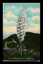US POSTCARD YUCCA PALM OR SPANISH DAGGER CALIFORNIA DESERT PLANT