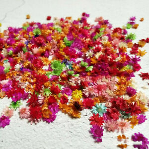 200PCS Dried Flowers For DIY Art Craft Epoxy Resin Candle Making Jewellery Craft